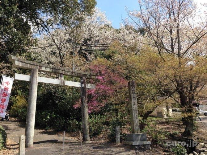 chujouhime-seigan-sakura-1