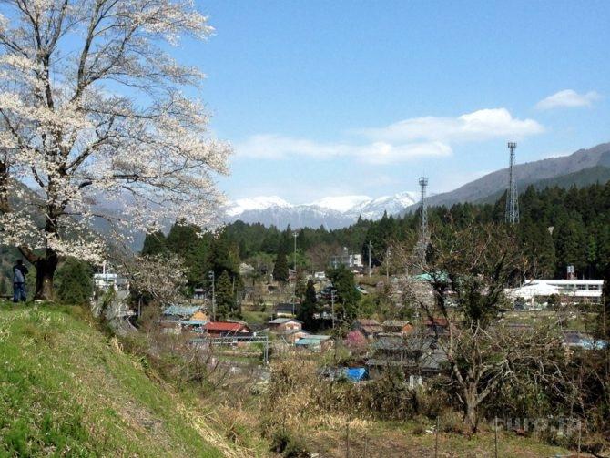 neodani-usuzumi-sakura-nougouhakusan