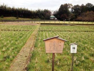 okayama-korakuen-07