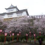 岡山県・鶴山公園の津山城跡(鶴山城)の津山さくらまつりに行きました