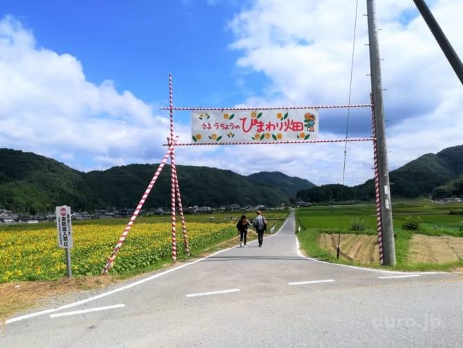 sayo-himawari-1