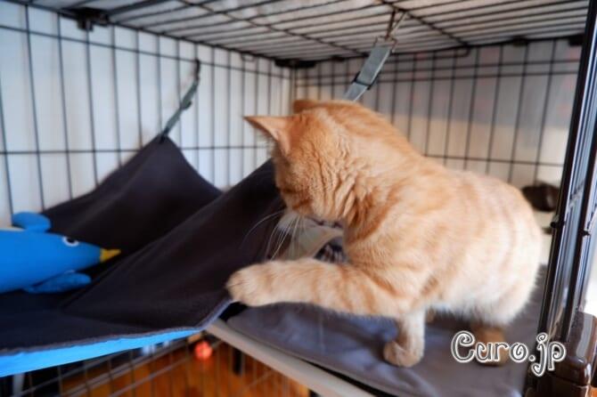 cat-hammock-5