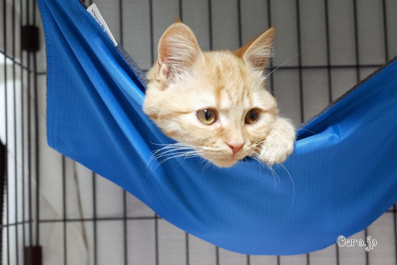 cat-hammock-7